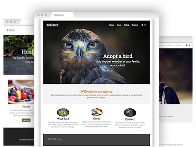 An assortment of simple–to–customize website themes